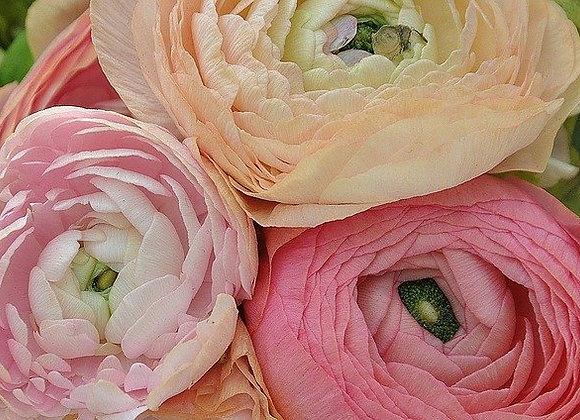 Ranunculus ¤14