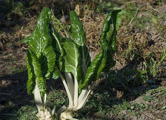Blette Liscia Verde da Taglio Graine Bio