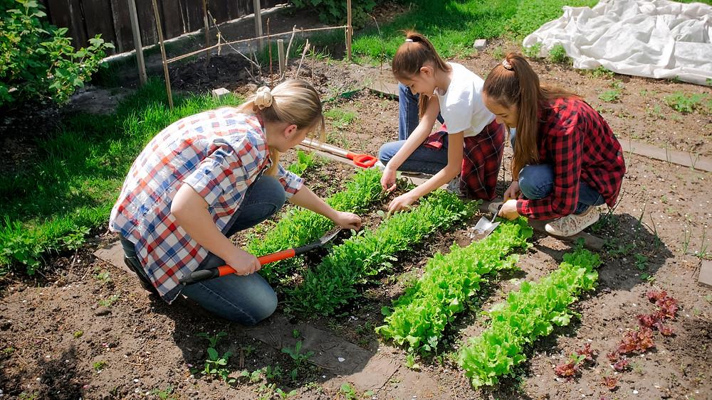 People bending while gardening