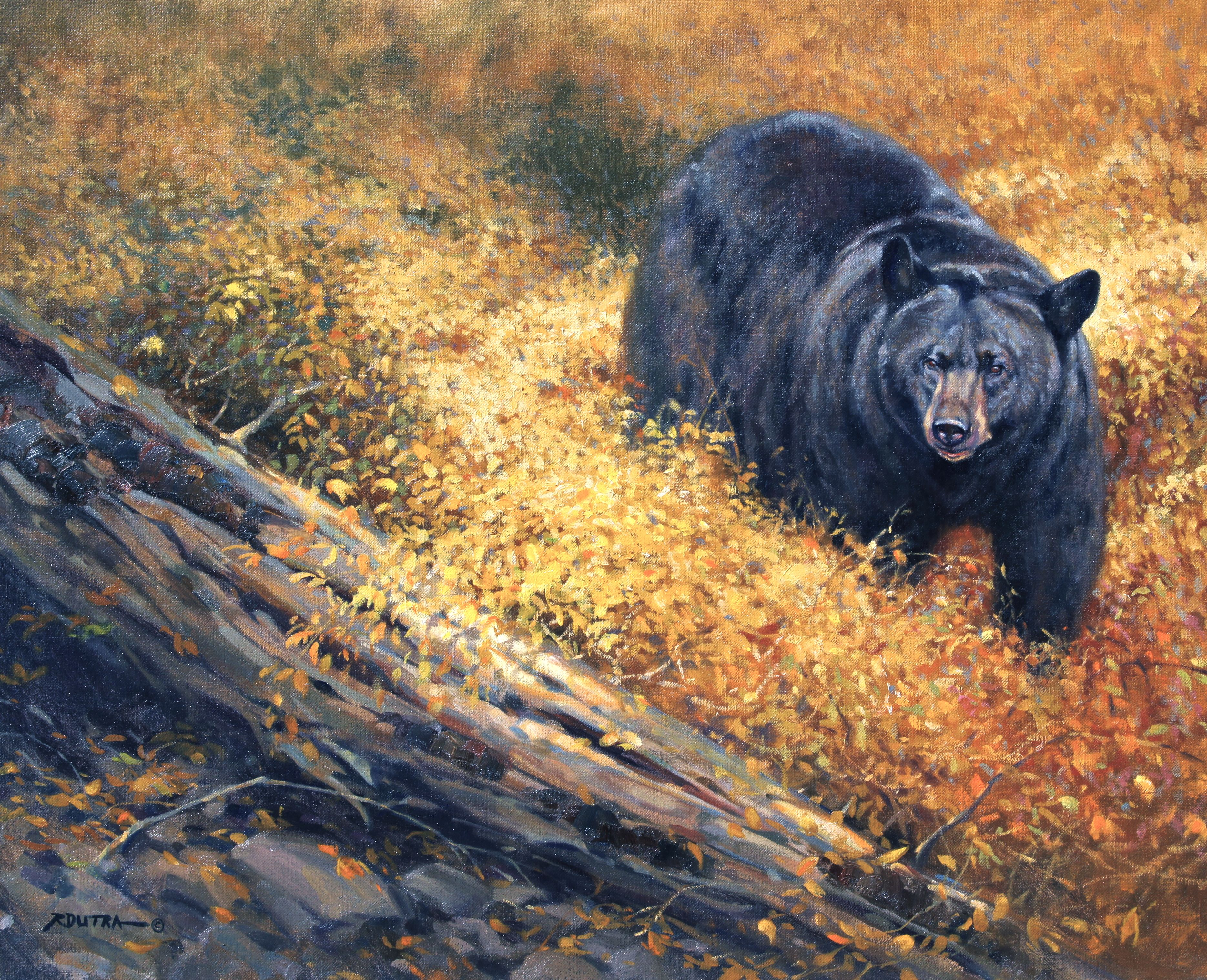 """Autumn Black Bear"""