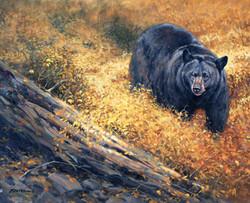 """Autumn Black Bear"""