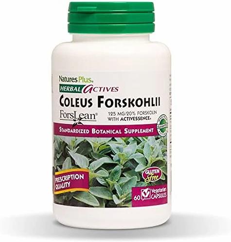 NaturesPlus Coleus Forskohlii  60 caps