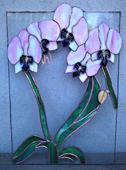 Orchidées_(Tiffany)_par_Dominique