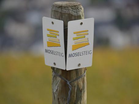 Moselsteig van Neef via de Calmont naar Beilstein - Mosel