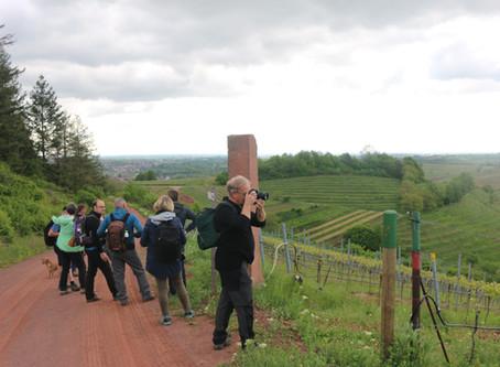 Wijnwandelen: 2 reizen in 2020 naar Baden en Pfalz