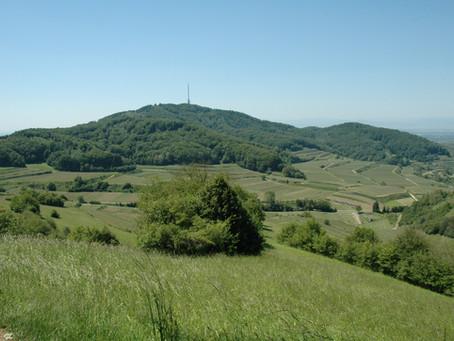 Een prachtige luswandeling rond Vogtsburg-Oberbergen - Kaiserstuhl (Baden)