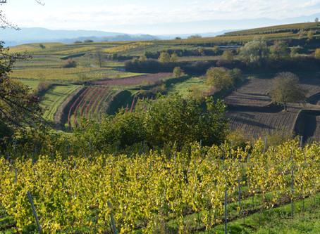 Wijnwandelen rond Malterdingen in Breisgau – Baden