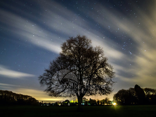 LIME TREE, SPRING NIGHT