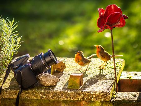Posing Robins