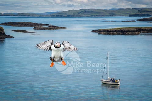 PUFFIN AND YACHT, TRESHNISH ISLES