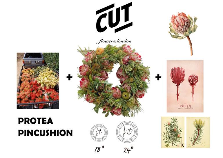 protea mood with price.jpg