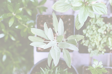 Herb Plants_edited.png