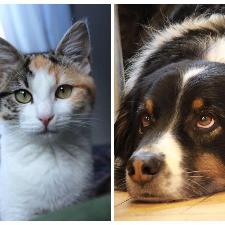Comment contribuer au bien-être de mon compagnon animal / MODULE 1