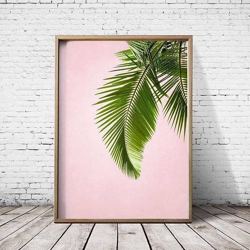 Quadro Palm