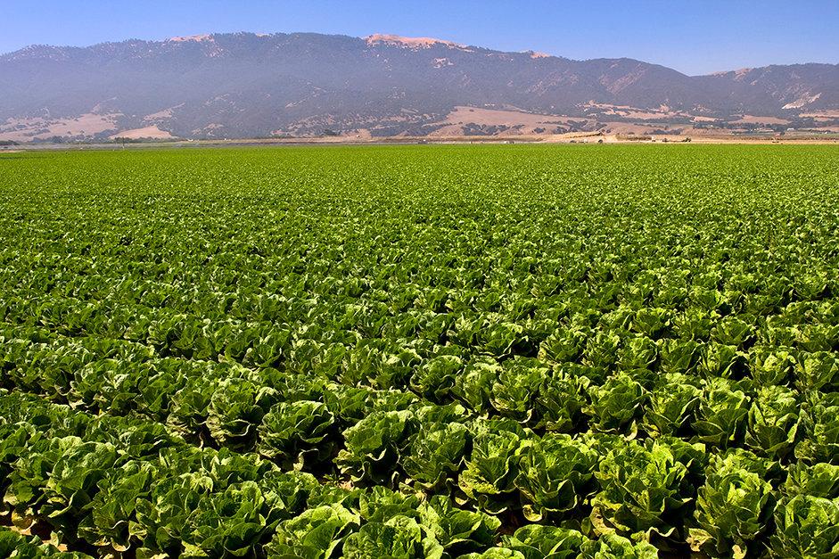 Lettuce Field-KipEvans-1599-42.jpg
