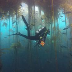 SIMoN_Kelp_Dive.jpg