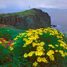 Anacapa-Island-KipEvanscopyright-crop-3.