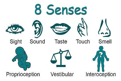 8 senses.jpg
