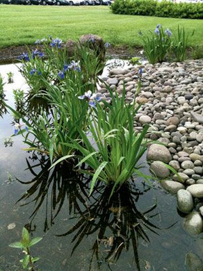 rain-gardens
