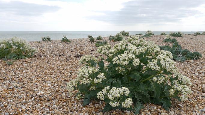 Unusual beach vegetation