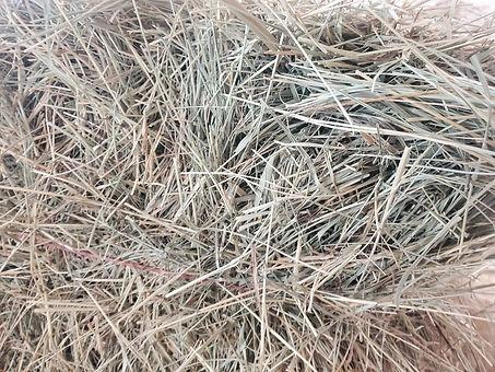 grass hay.jpg