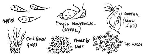 Creatures of a Self-Sustaining Aquarium
