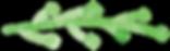 stem and leaf.png