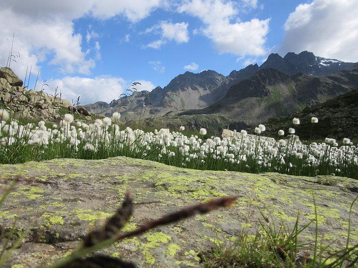 Val Grosina 013.jpg