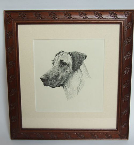 A handsome vintage print of a great Dane.