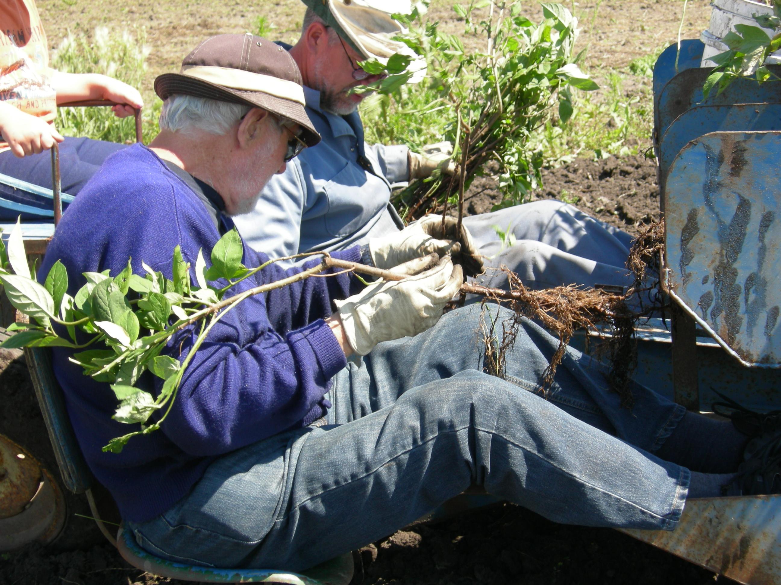 shelterbelt_planting