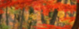 img_autumn.jpg