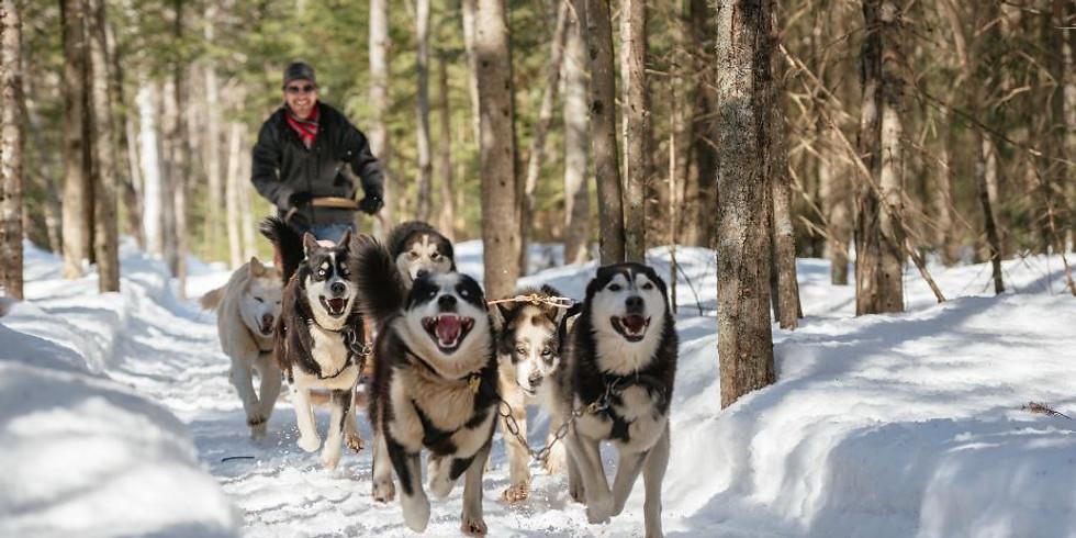 Traîneau à chiens - 130$