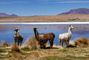 Cez soľnú púšť a Atacamu až do Chile