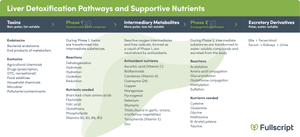 Liver detoxification pathways and supportive nutrients graphic