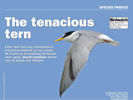 A tern for the best