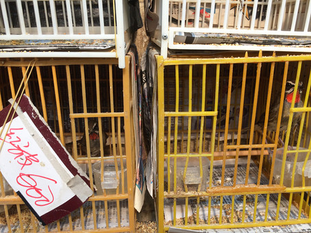 All heaven in a rage: Hong Kong's troubling wild bird market