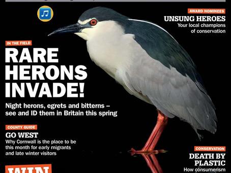 Britain's breeding heron species