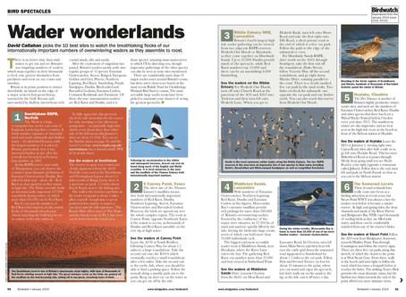 Top ten sites for wader flocks