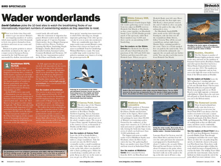Top ten sites for wader flocks