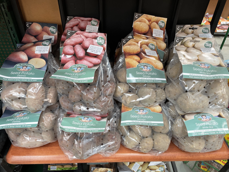 Seed Potatoes now in, great range!!