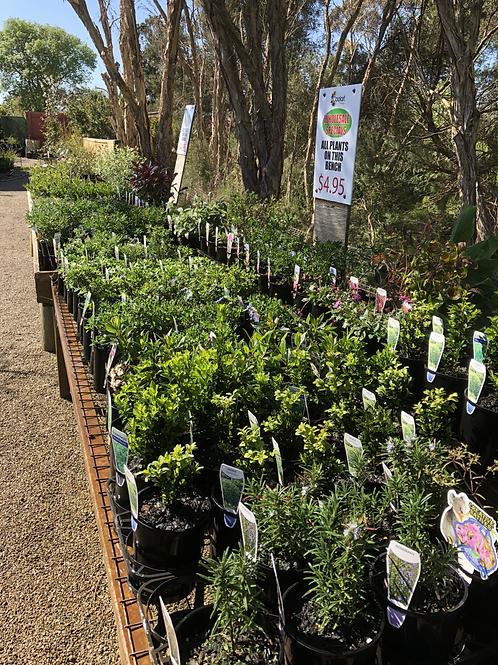 Wholesale $4.95 plants
