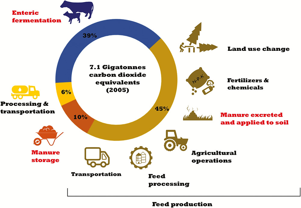 Pie chart showing the distribution of carbon emissions by source (in gigatonnes). 39% from enteric fermentation, 45% from feed production, 10% from manure storage, 6% from processing and transportation.