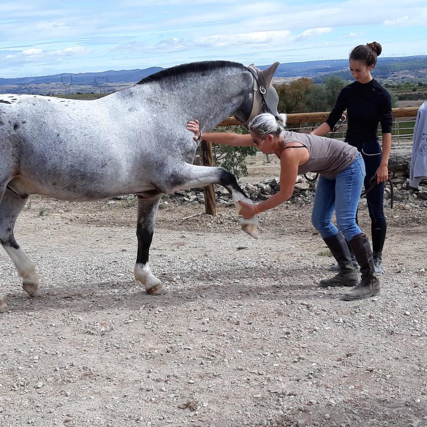 Osthéopathe équin