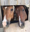 pension chevaux les crins de caral