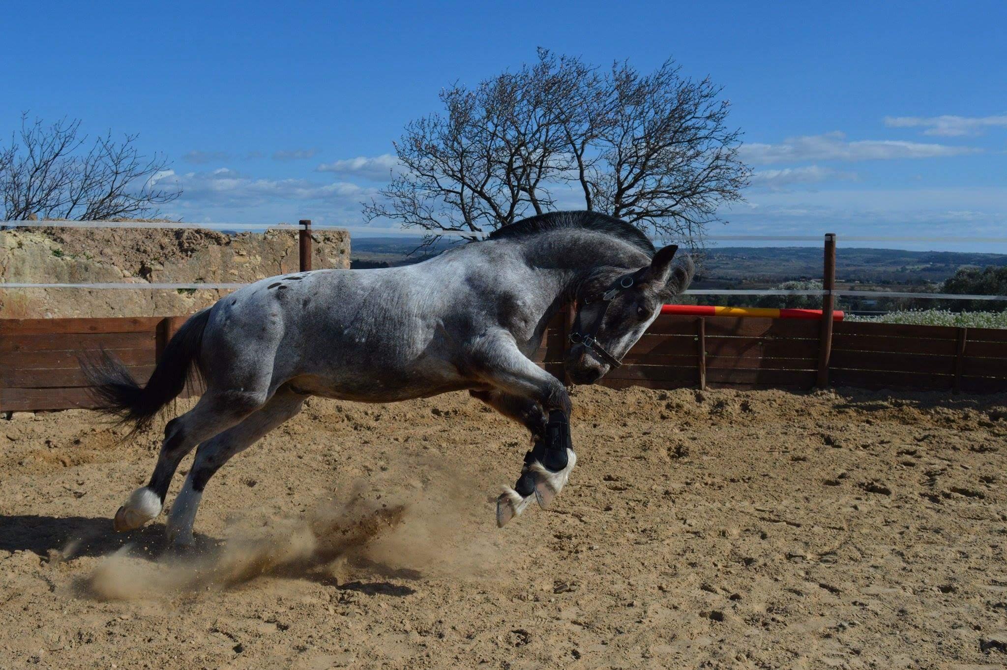 Des chevaux joyeux...