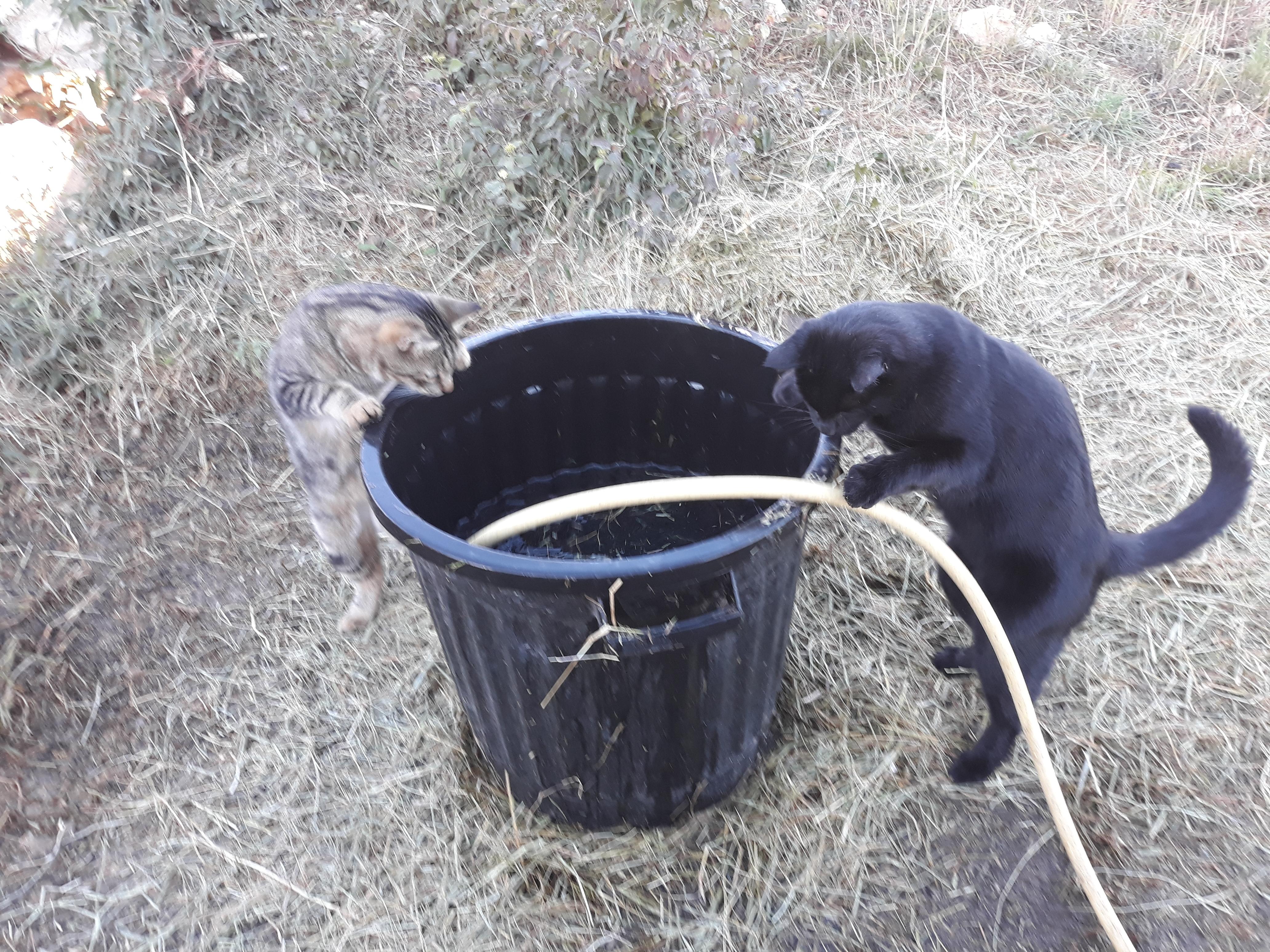 Des chats curieux.....