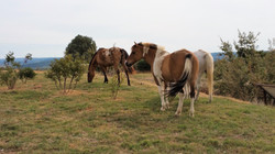 Jimmi, Ulotte et Saladelle
