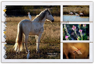 "Photo Originale ""Le cheval de Gruissan"""