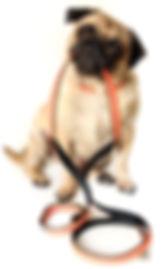 dog walking bankstown, dog walking panania, dog walking revesby, dog walking chullora, dog walking yagoona, dog walking milperra, dog walking georges hall, dog walking one tree point, dog walking bass hill, dog walking chullora, dog walking east hills