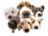 dog walking sutherland, dog walking engadine, dog walking cronulla, dog walking miranda, dog walking kirrawee, dog walking yowie bay, dog walking gymea, dog walkers engadine, dog walkers sutherland, dog walkers sylvania, dog walking sylvania, dog walking